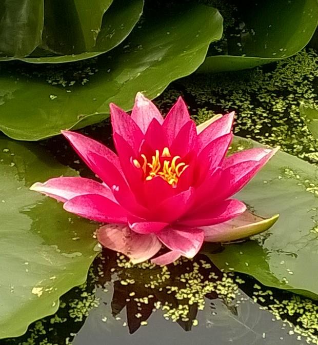 ''No mud, No Lotus''  - Thich Nhat Hanh